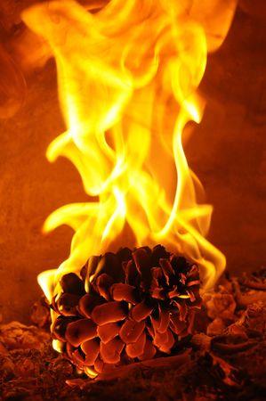 Burning pine Stock Photo - 4869382