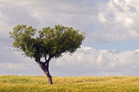 Tree isolated against the sky in a green field photo