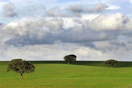 Tree in al green field with a moody sky photo