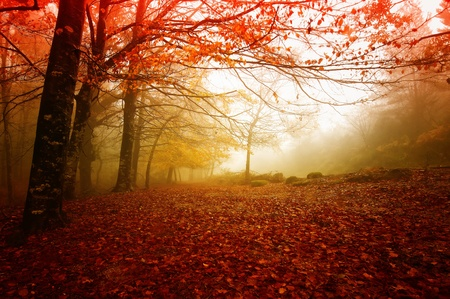 tree in autumn: Gerês N. P. Portugal in beautiful Autumn colors Stock Photo