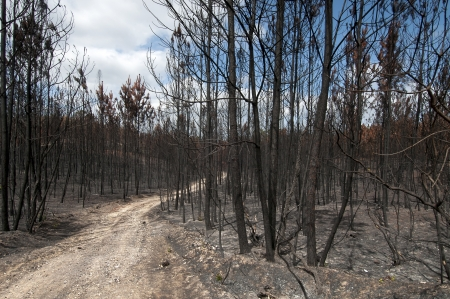 ravaged: Burned forest after a huge fire in Portugal