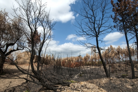 Burned forest after a huge fire in Portugal Stock Photo - 15708342