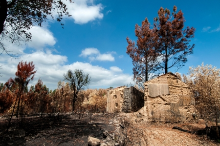 Burned forest after a huge fire in Portugal Stock Photo - 17994965