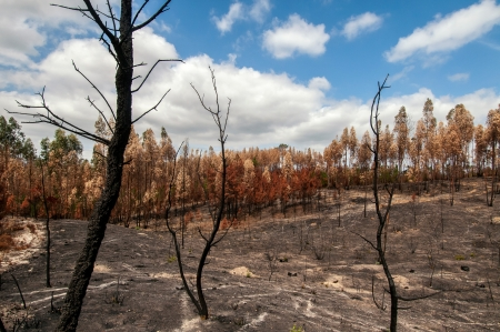 Burned forest after a huge fire in Portugal Stock Photo - 17994957