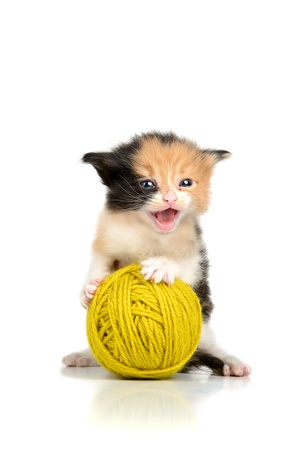 Beautiful young kitten with a wool ball photo