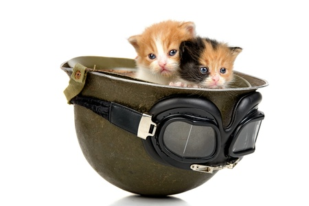 Two lovely kittens inside a military helmet photo