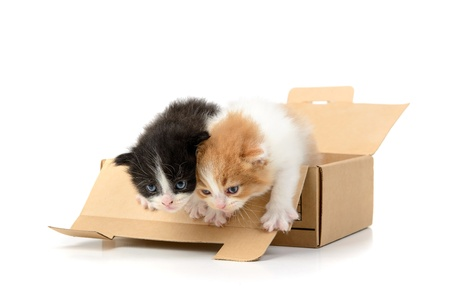 Lovely kittens inside a cardboard box isolated in white photo