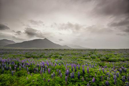 icelandic: Beautiful landscape of Icelandic mountain