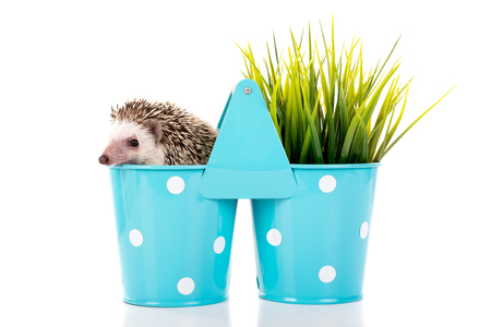 Cute hedgehog inside a vase isolated in white Imagens - 74544233
