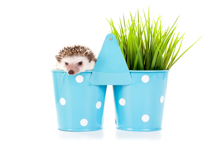 Cute hedgehog inside a vase isolated in white Imagens - 74544234