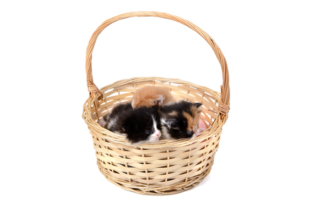 Lovely kittens inside a basket isolated in white