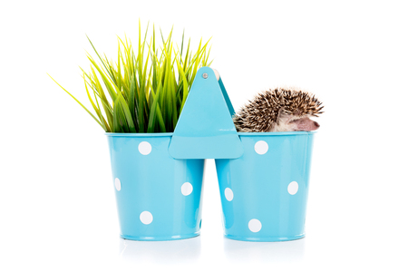 Cute hedgehog inside a vase isolated in white Imagens - 88974466