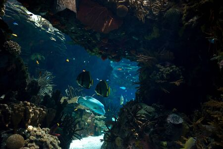 Beautiful underwater scene with corals and fishes