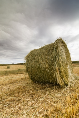 straw bales after harvest Stock Photo - 16701197