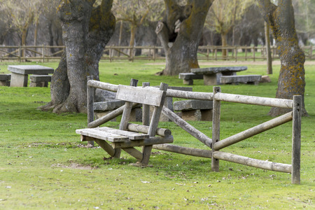 wooden bench in a park next to some trees photo