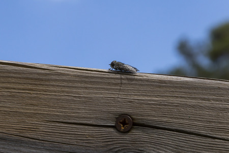 horsefly: Horsefly supported in a wood on a sunny day outdoor Stock Photo