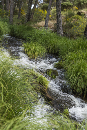 them: small river running between green herbs them