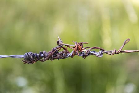 oxidized: piece of wire fence oxidized on a background green