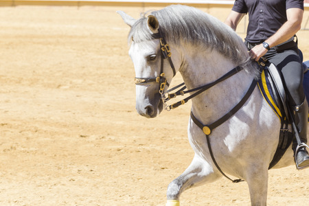 obedient: beautiful horse of pure breed docile and obedient Stock Photo