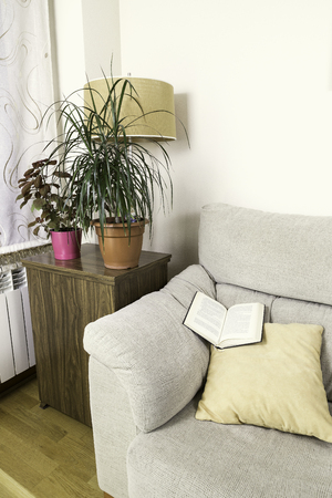 modern living room: book on the top of the arm of a sofa with some green plants