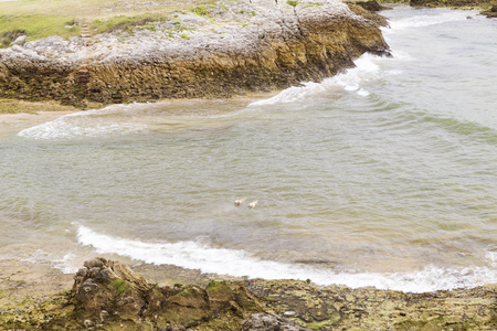 two dogs swimming on the coast with waves in the sea Stock Photo