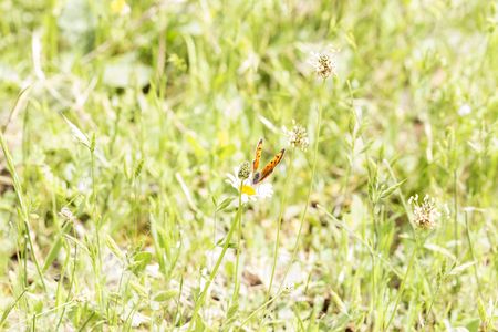 butterfly feeding on pollen and nectar from a flower pollinating