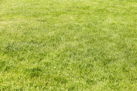 meadow of green grass to use as background in advertising or to put text