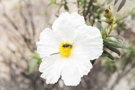 insect feeding on pollen and nectar from a flower pollinating Stock Photo