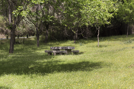 stone table for picnic in the shade of a tree in a green forest on a spring day