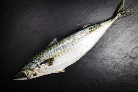 Mackerel fresh fish on a black slate table prepared for cooking Stock Photo