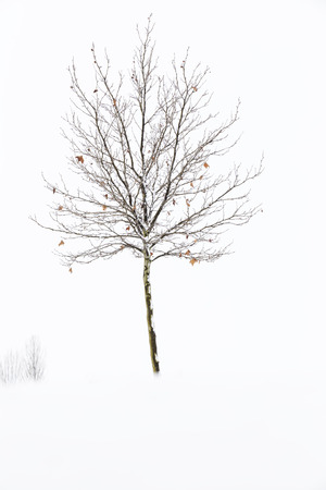 lonely tree without leaves in the middle of snow on a cold winter day Stock Photo