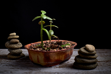 terracotta pot with a succulent plant and 2 heaps of stones on the sides on a wooden board and a black background Stock Photo