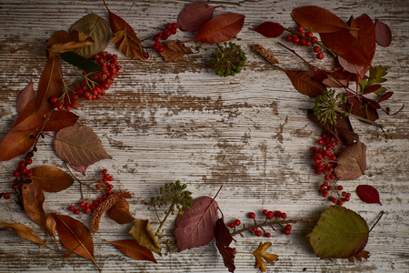 clear wood table background with dried leaves and fruits around with an area to put text for advertising Stock Photo
