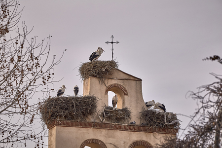 beautiful storks in a spring sunset on the belfry of a church