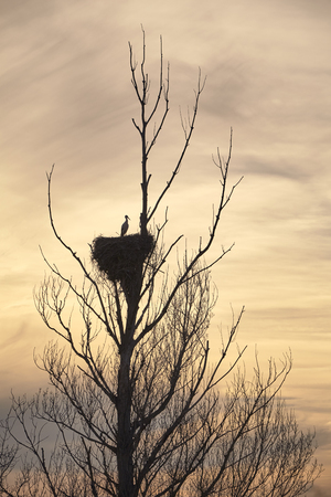 beautiful storks in a spring sunset in their nests on the top of a tree Reklamní fotografie