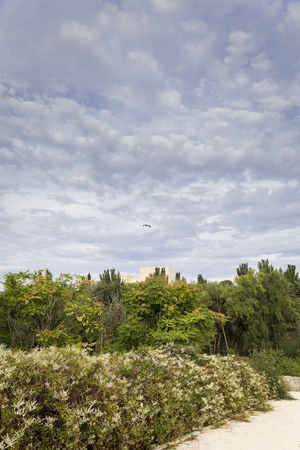 Crane flying above a building hidden among green plants in spring after migration Reklamní fotografie