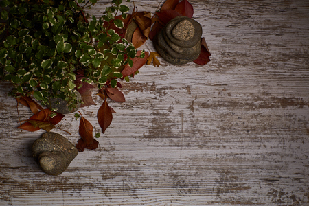 clear wood table background with dried leaves and fruits around with an area to put text for advertising Reklamní fotografie