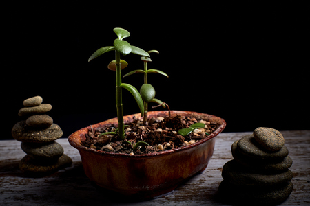 terracotta pot with a succulent plant and 2 heaps of stones on the sides on a wooden board and a black background Reklamní fotografie