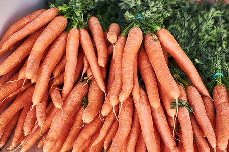 bunches of fresh carrots from organic garden prepared for sale