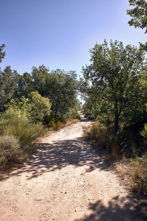 mountain dirt road for hiking surrounded by holm oaks. for trecking