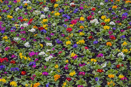 colores: Campo de flores de colores