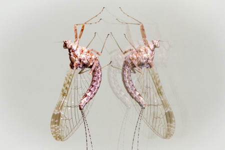 Macro photograph of a beautiful dragonfly Stock Photo