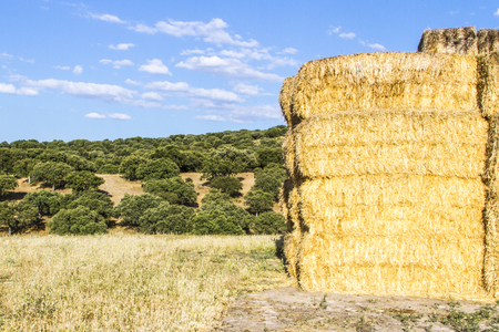 alimentation: wheat harvest, clouds, fields and landscapes in Spain