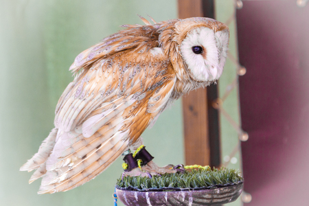 Bird snowy owl sitting on the street