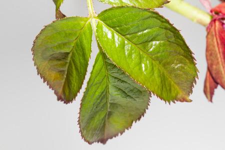 hojas: brote de hojas verdes