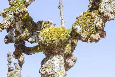 tree trunk with moss Stock Photo