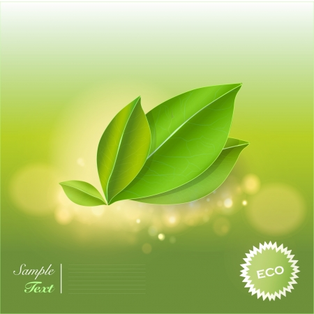 Green leaves background  Vector design   Stock Vector - 17353271
