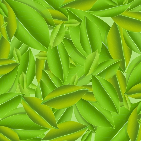 Several green leaves