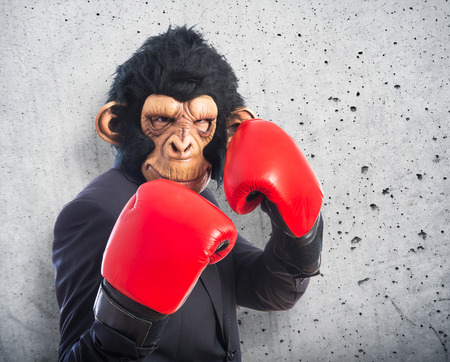 Monkey man with boxing gloves photo
