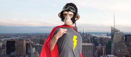 Monkey man proud of himself